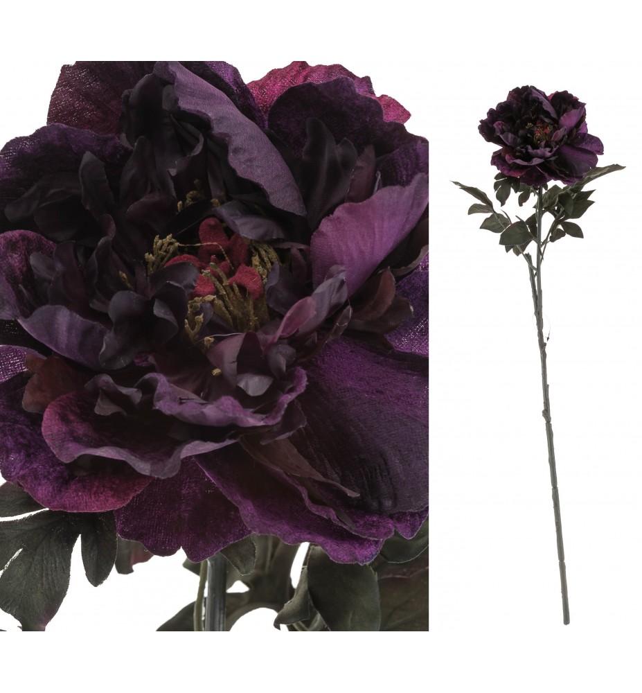 Piwonia fioletowa Aluro