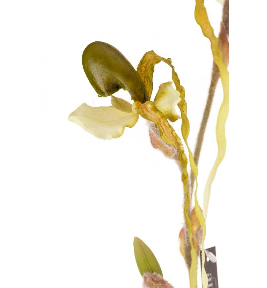 Roślina sztuczna.- exotic orchidea Aluro