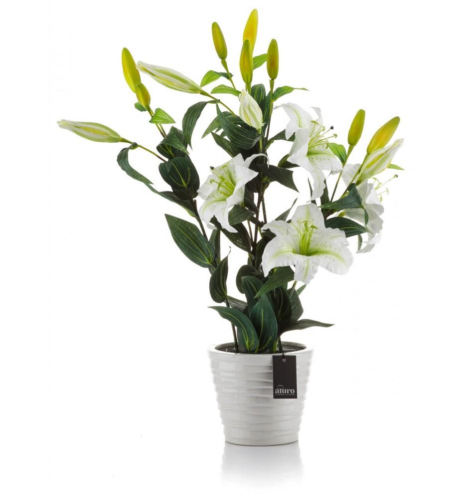 Roślina w doniczce ceram.- lilia biała Aluro