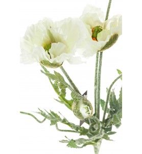 Roślina szt.- białe maki bukiet 5 kwiatów Aluro